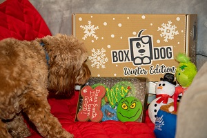 Box Dog Limited Time Offer